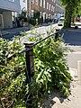 Railings to raised pavement on north side of Flask Walk, Hampstead, June 2021.jpg