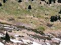 Rainier meadow with two goats - Flickr - brewbooks.jpg