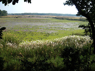 Shuklaphanta National Park wildlife reserve