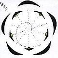 Ranunculus floral diagram.jpg