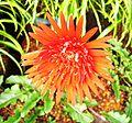 Red-flower-strands1.jpg