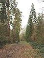 Redwood trees in Langley Park - geograph.org.uk - 107431.jpg