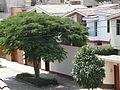 Regular street view in San Borja II.jpg