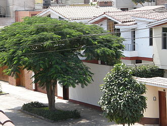 San Borja District - Street view