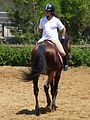 Riding a Horse Backwards 1110819.jpg