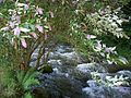 River Heddon near Hunters Inn.jpg