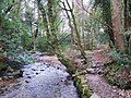 River Taw, Sticklepath - geograph.org.uk - 1092469.jpg