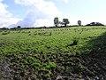 Roosky Townland - geograph.org.uk - 999540.jpg