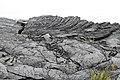 Ropy and Smooth Pahoehoe Lava Flows Kalapana Hawaii.jpg