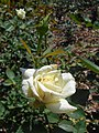 Rosa Polarstern 2018-07-10 5434.jpg