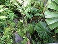Royal Botanic Gardens, Sydney 07.JPG