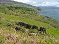 Ruined Croft, Overlooking Loch Scridain - geograph.org.uk - 181469.jpg