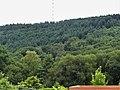 Saint-Sulpice-le-Guérétois vue sur forêt Chabrières depuis RD 914 (1).jpg