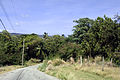 Saint Andrew, Barbados 064.jpg