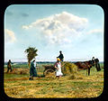Saint Petersburg farmers harvesting hay, near Leningrad.jpg