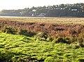 Salt marsh at Black Scar, Llansteffan - geograph.org.uk - 603870.jpg