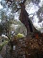 San Bartolomeo al mare - Fotografia di Tony Frisina - Alessandria - DSC08082.JPG