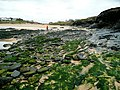 Sand, seaweed and shale - geograph.org.uk - 1229077.jpg