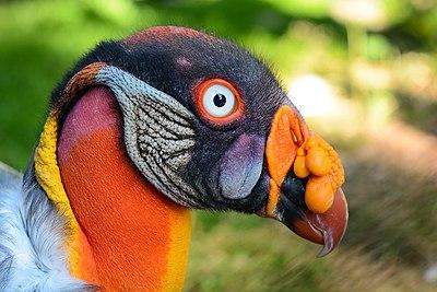 πραγματικά μεγάλο μαύρο πουλί δωρεάν hardcore ενηλίκων πορνό