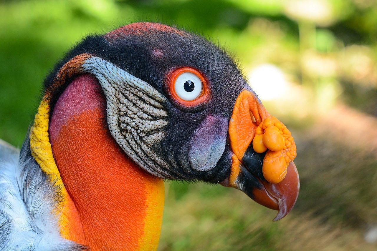 Burung