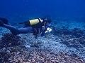 Scientist Nick Graham does a fish count, British Indian Ocean Territory (7029059225).jpg