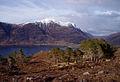Scots pines above Loch Torridon - geograph.org.uk - 158592.jpg