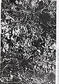 Sensitive plant species surveys, Butte District, Beaverhead and Madison Counties, Montana (1996) (19890085463).jpg