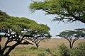 Serengeti landscape (5) (28631238305).jpg