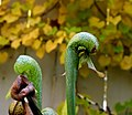 Serpents in the Fall (22783596603).jpg