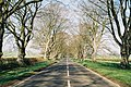 Shapwick, Dorset, B3082 road.jpg