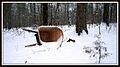 Sherman Branch Regional Park - Wheelbarrow in snow - panoramio.jpg