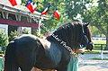 Shire Horse (2691048372).jpg