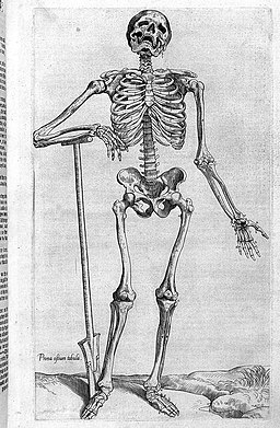 "Skeleton with spade,""Compendiosa..."", T. Geminus, 1553 Wellcome L0002876"