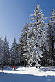 Skiing in Oberhof March 2013-05.jpg