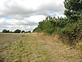 Skirting a field's edge - geograph.org.uk - 1493129.jpg