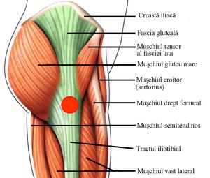 durere în trohanterul mai mare al articulației șoldului)