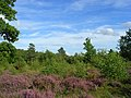 Snelsmore Common - geograph.org.uk - 936728.jpg