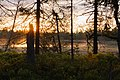 Sonnenaufgang beim Wildseemoor bei Kaltenbronn.jpg
