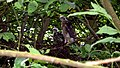 Sparrowhawk Nest 09-07-09 (4482445377).jpg