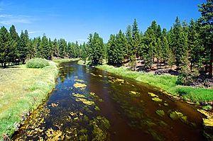 Archaeplastida - Trees, grasses and algae in and around Sprague River, Oregon