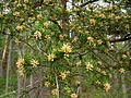 Spring-pine-tree - West Virginia - ForestWander.jpg