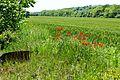 Spring Green with red - Verde crud cu rosu - panoramio.jpg