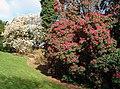 Spring Heligan Gardens - geograph.org.uk - 735741.jpg