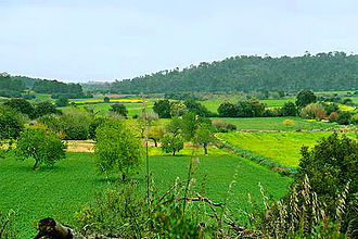 Field (agriculture) - Image: Spring fields Mallorca