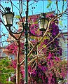 Spring in Atene, Grecia - panoramio.jpg