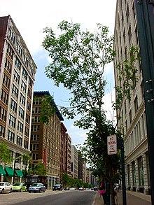 Fotografia del Washington Avenue Historic District