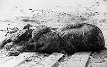 Carcassa che si arenò nei pressi di St. Augustine, in Florida, nel 1896.