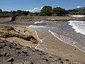 Starr-110312-3128-Thespesia populnea-after tsunami canal surge-Kanaha Beach-Maui (24448670694).jpg