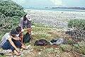 Starr 990419-0565 Solanum nelsonii.jpg