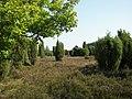 Steingrund 001.jpg